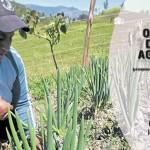 La agroecología: respuesta contra los transgénicos y la biotecnología.