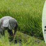 Cambios en la matriz productiva del campo, ¿más agronegocio? – Ojo de agua