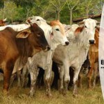 El consumo de carne: ¿cuánto le cuesta al ambiente el ganado? – Ojo de agua