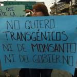 Campesinos presentaron acción de protección y solicitud de medidas cautelares, ante la confirmación de cultivos transgénicos