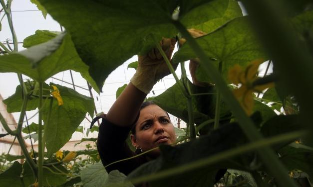 ¿Qué desigualdades frenan la adaptación de las cubanas al cambio climático?